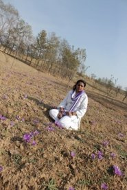 In the saffron fields